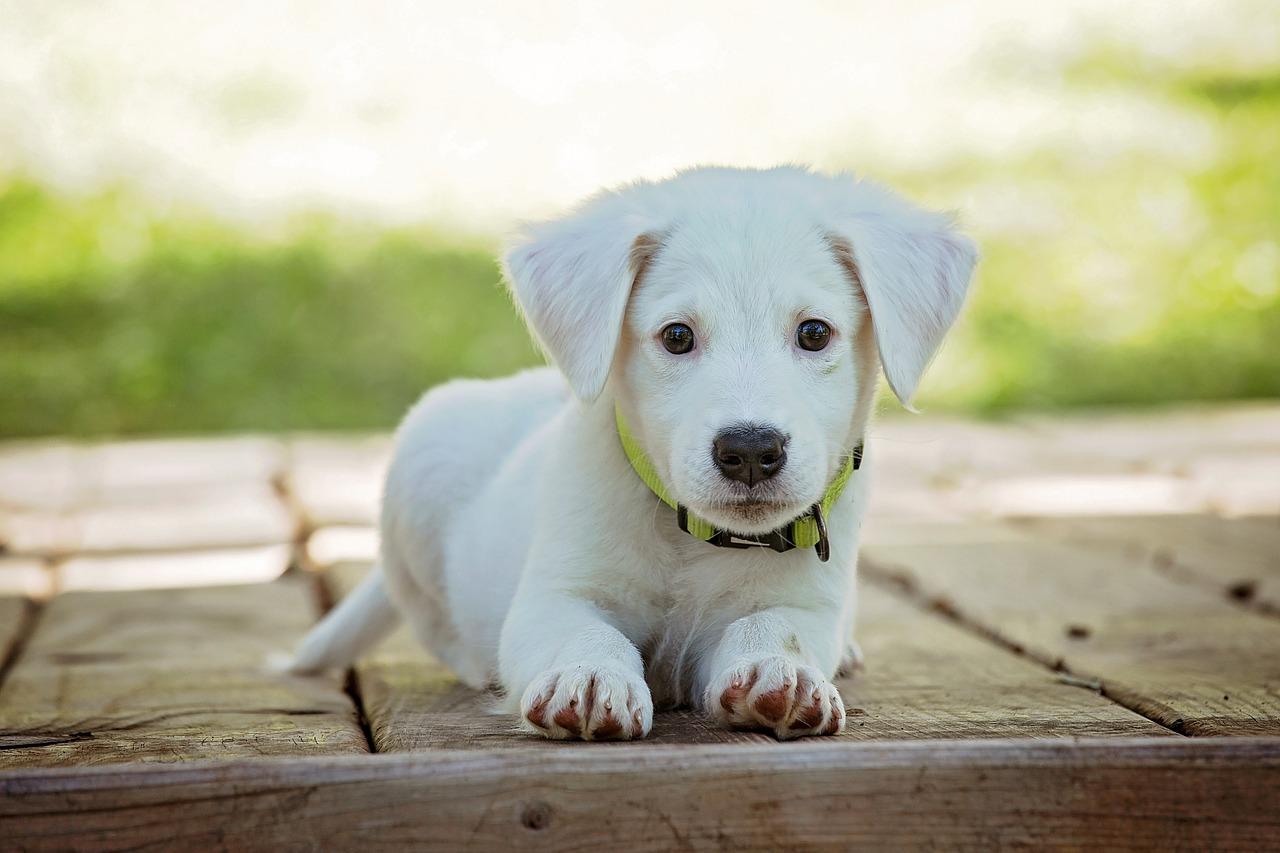 Der Umgang mit Hunden? Was Sie zuerst wissen sollten